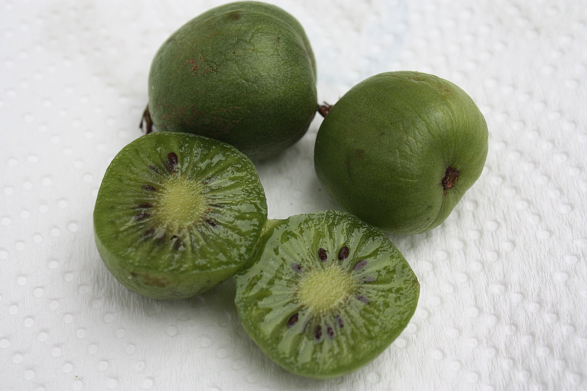 how to say words in kiwi